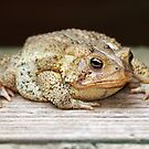 Jabba the Toad by Bine
