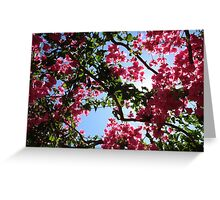 Perfect Pink Bougainvillea In Blossom Greeting Card