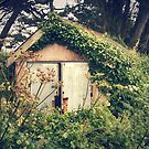 The Shed by Ursula Rodgers