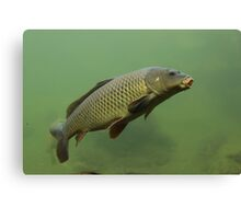 Carping on Canvas Print