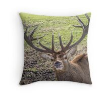 Nosy Red Stag deer Throw Pillow