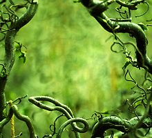 Curly tree branches  by JBlaminsky