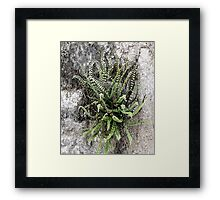 French Stone Wall Fern Framed Print