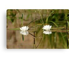 Water Lily Duet Canvas Print