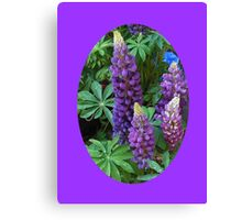Oval Lupins Vignette Canvas Print