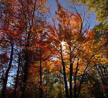 Autumn Trails by Janet Gosselin