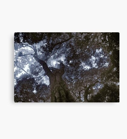 Rainforest Canopy Enhanced Canvas Print