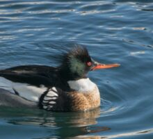 Merganser Encircled in Icy Water at Harbourfront Sticker