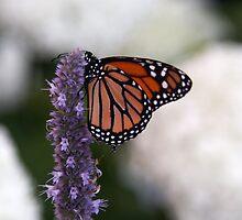 Butterfly by Janet Gosselin