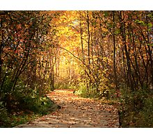 Northern trails Photographic Print