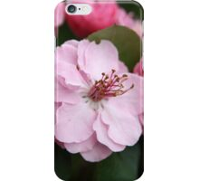 Tree Blossoms  iPhone Case/Skin
