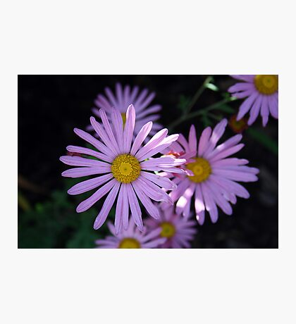 Purple Blossoms Photographic Print