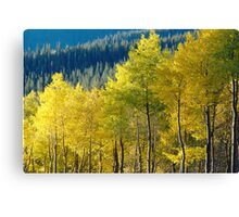 Golden Hillside Canvas Print
