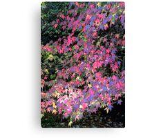 Fuchsia Explosion Canvas Print
