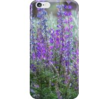 Color in the High Desert iPhone Case/Skin
