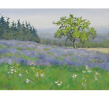 Lavender Afternoon Photographic Print
