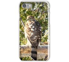 sharp-shinned hawk iPhone Case/Skin