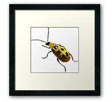 Potato Bug Framed Print