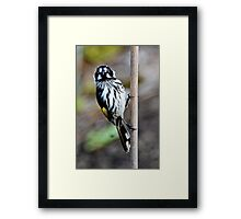 Are you looking at me? Framed Print