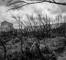 Burned forest by andremm