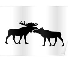 Moose Bull And Cow Poster