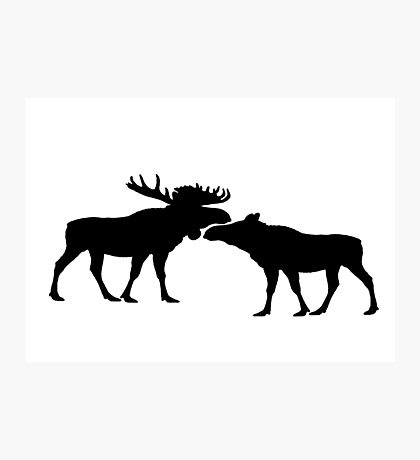 Moose Bull And Cow Photographic Print