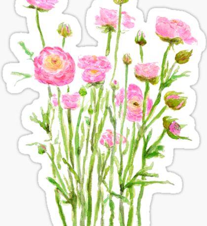 pink Ranunculus pink peony  Sticker