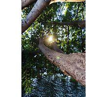 Enjoying nature Photographic Print
