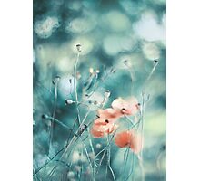 July Dreams Photographic Print