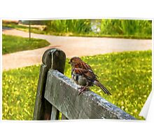 BIRD ON WITHERED BENCH Poster