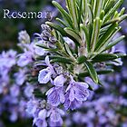 Rosemary card by © Kira Bodensted