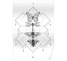 Flying Insects Poster