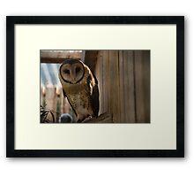 masked owl Framed Print