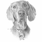 weimaraner drawing by Mike Theuer