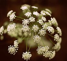 Queen Anne's Lace by Jessica Jenney