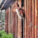 A Stable Friendship by Skye Ryan-Evans