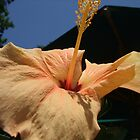 Beautiful Flower Photograph  by BeccaLavellan