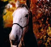 Autumn Equine by WillFPA