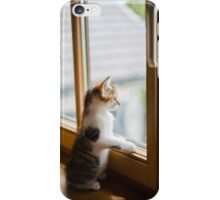 cat look from the window  iPhone Case/Skin