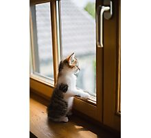 cat look from the window  Photographic Print