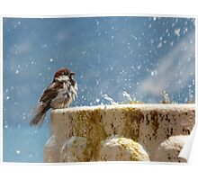Bird on the water fountain Poster