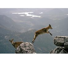 mountain goats Jump Photographic Print
