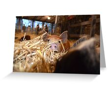 Oink! Greeting Card
