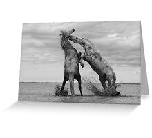 Fighting horse Greeting Card