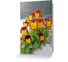 Group of little pansies Greeting Card