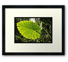 Pure Thomacheat #12. SYNTHESIS Framed Print