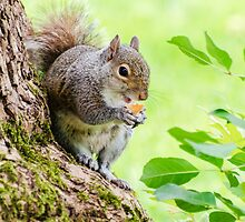 Smiling Squirrel by MMPhotographyUK