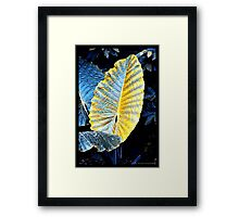 Pure Thomacheat #14. MEAS (Gold) Framed Print