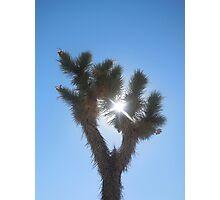 joshua tree in the sky Photographic Print