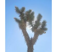 be joshua tree Photographic Print